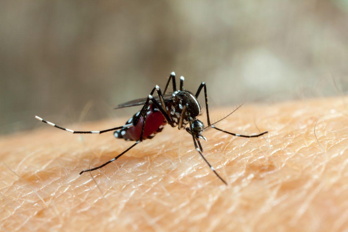 O Brasil está prestes a viver uma epidemia de Chikungunya